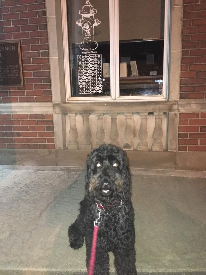 City Hall Dog Selfie